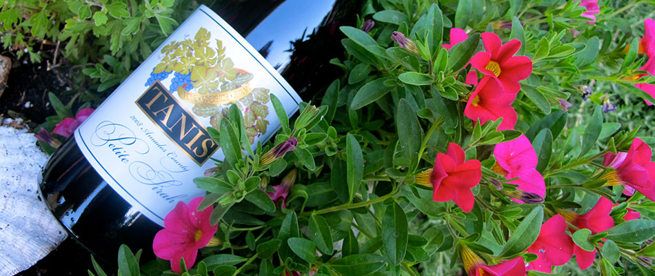 A bottle of Tanis wine in purple flowers.